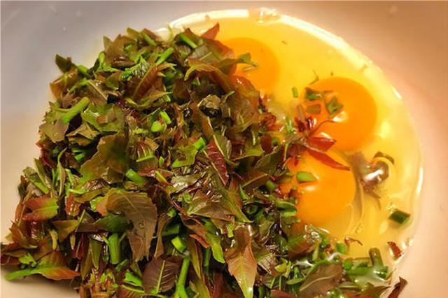 成都今春上市最贵当季菜 刚上市一斤椿芽要卖55元