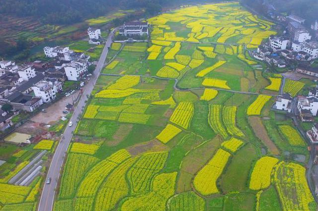 四川休闲农业新一轮升级启动 迈向三产融合的3.0时代