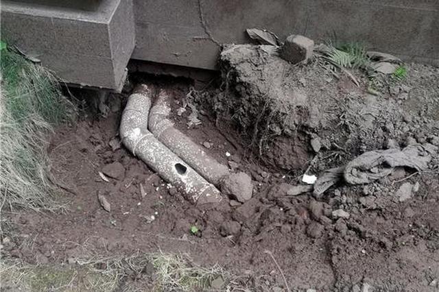 自贡小区树根长进下水管道造成堵塞 业主家两次被污水倒灌