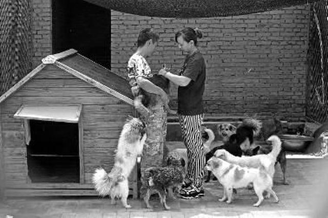 女子自掏50万为狗建家 2年救助上千条流浪狗