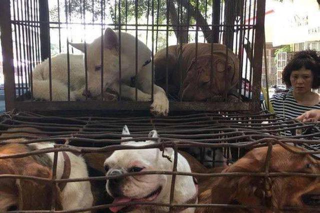 凑钱救狗!志愿者众筹3600元买下15只送屠宰场的宠物狗