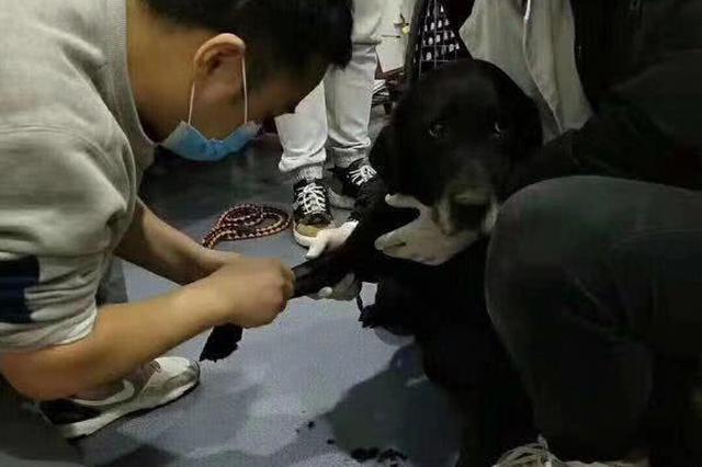 綿陽一寵物店關門1個月無人照看 3只寵物狗死在店中