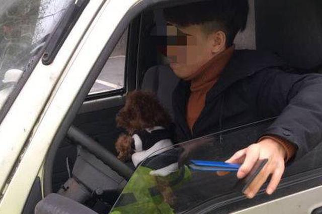 左手开车右手抱狗 然后他被交警拦下了