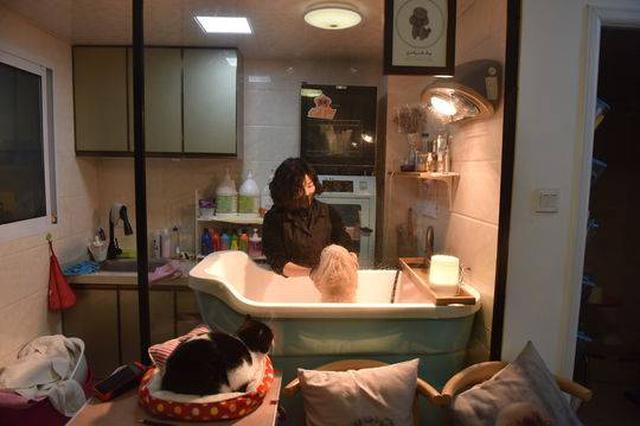 萌宠洗澡过新年 美容价格上涨三至五成