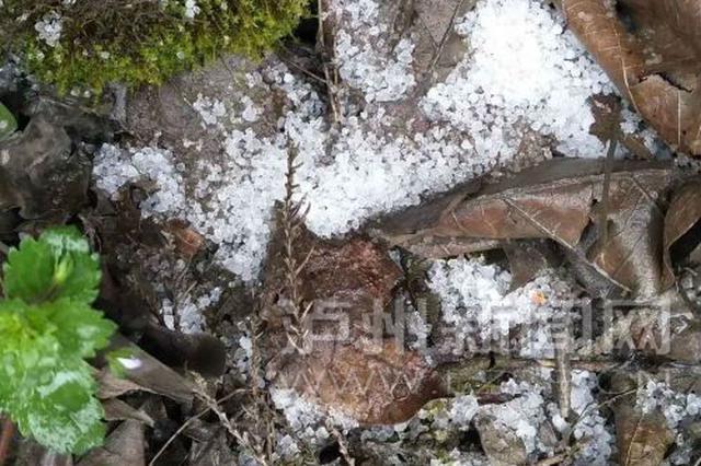 立春过后依旧冷冷冷 泸州古叙山区2月17日突降雪粒子