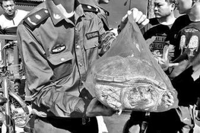 """鳄龟当""""龙龟""""卖 获利近千元"""