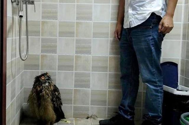 峨眉市民外形神似猫头鹰大鸟 快看你认识这只珍鸟吗