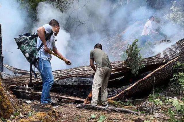 好险!凉山木里森林中一棵大树被雷击引燃 村民及时扑灭