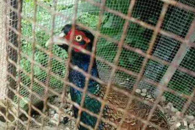 男子无证驯养野生保护动物被查