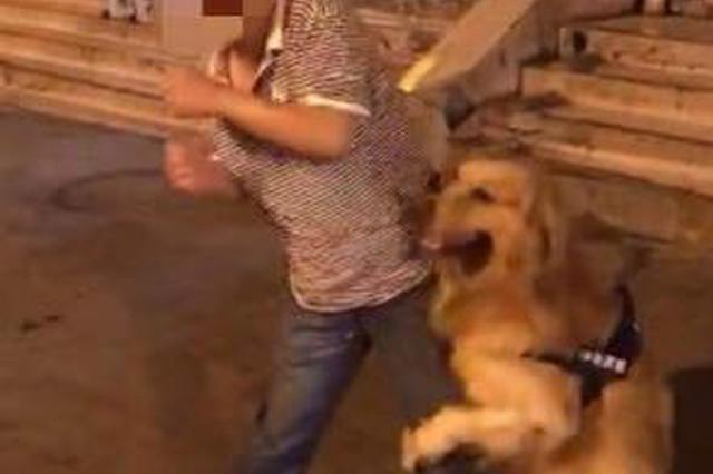 金毛犬扑扒路人 狗主人不制止还拍视频被行拘