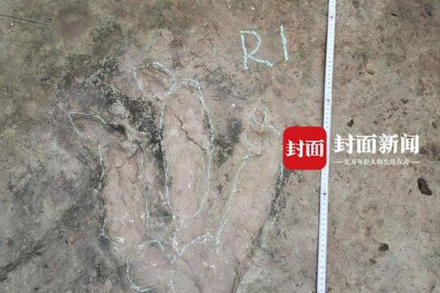 宜宾乡村网红报料:我家发现恐龙脚印