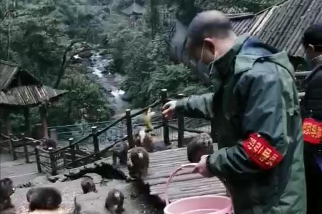 网曝百余峨眉山猴子饿得下山堵路? 景区:不是峨眉山的猴子