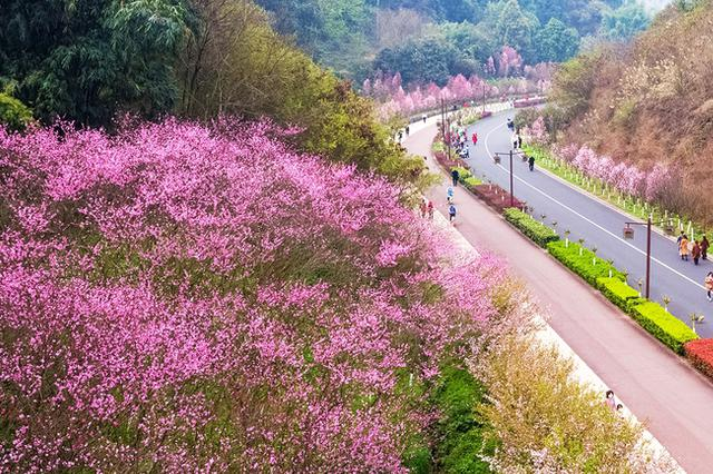 这个春天,一起瞰乐山花开似锦