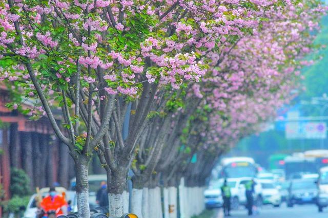"""春暖花开,等你感受重现""""烟火气""""和""""市井味""""的成都!"""