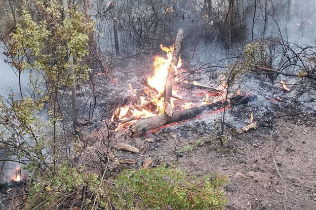 对话西昌山火扑救者:一根木头复燃山火 全队差点被包围