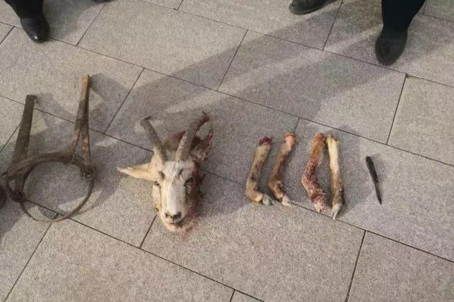 多次猎杀保护动物 7人被判赔15.6万元