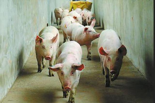 生猪生产持续较快恢复 市场供应情况有所改善