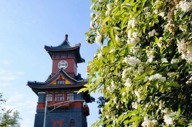 四川大学今年在川招生2344人 设立8个双学士学位培养项目高考