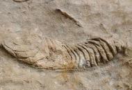 古蔺无名溶洞发现完整鱼化石