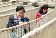 手工粉条托起富民产业