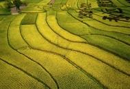 金色稻田扮靓美丽乡村