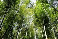 泸州:看竹影斑驳 享悠然意境