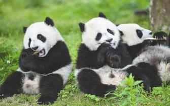 初夏的熊猫幼儿园