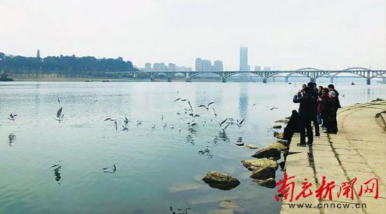 市民与鸟儿在嘉陵江南充城区段江畔亲密接触