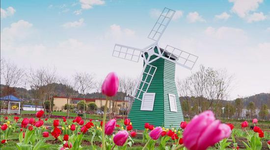 郁金香观赏节将于3月6日开园