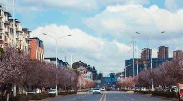 资阳城区春景如画 网红大千路成颜值担当