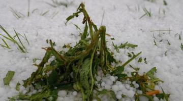 四川红原发生罕见冰雹天气