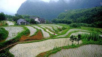 泸州:画稿溪里的西溪村情深深雨蒙蒙