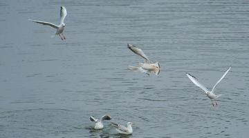 成都鹿溪河生态区成候鸟栖息地