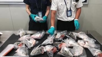 成都双流机场海关首次截获三文鱼鱼头
