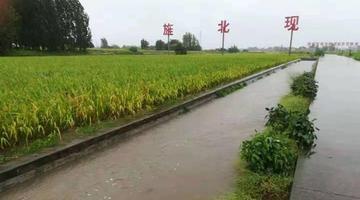 暴雨致德阳市旌阳区稻谷倒伏4720亩