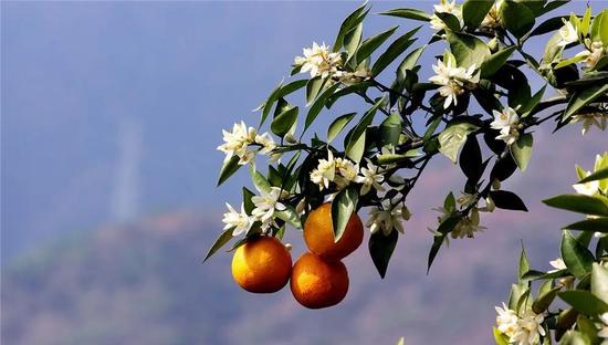 石棉赏花时间表 再不错过每一次花开的季节