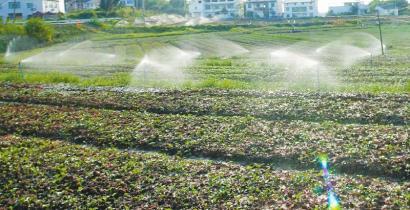 广安市前锋区观塘现代农业园区利用微喷节水技术灌溉幼苗。周修建 摄(视觉四川资料图片)
