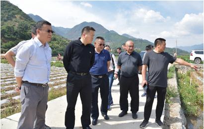 上海烟草集团到德昌调研烟叶生产