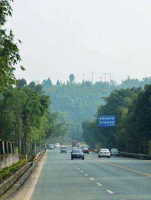 打造百里翠竹长廊宜长路竹景观效果初显
