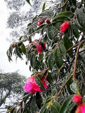 古蔺县桂花镇虎头山迎来首场降雪