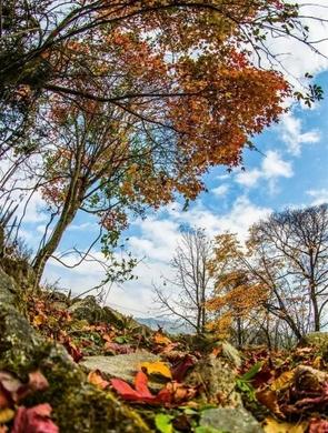 四川石棉:红叶层林尽染 美景如画