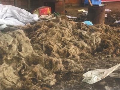 在彩钢棚的地上堆放着狗毛。