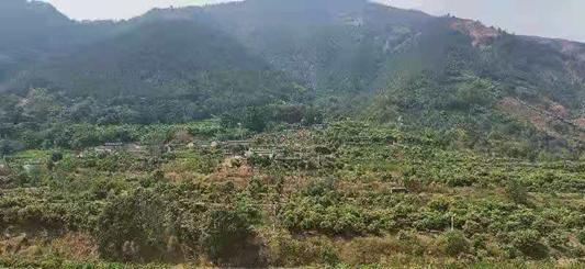 德昌:打造经济林防火隔离带  筑牢