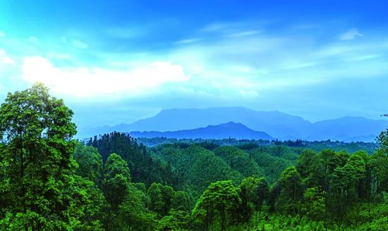 绿色,雅州大地的最美底色