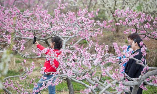 游客在汉源申沟桃园拍照留影 雅安日报/北纬网记者 郝立艺 摄