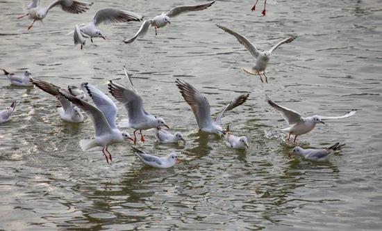 雅安雨城区:加强鸟类保护 促进人与自然和谐共生