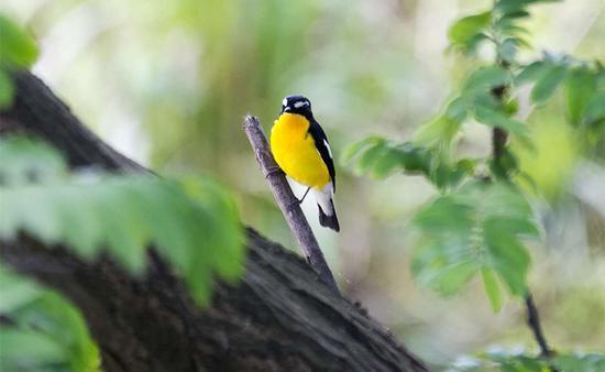 保护鸟类栖息环境 增添城市生态底色