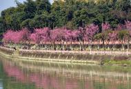 成都锦江河畔春色如画