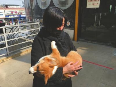 """1月11日,小吴抱着死去的柯基犬""""莱恩""""失声痛哭。"""