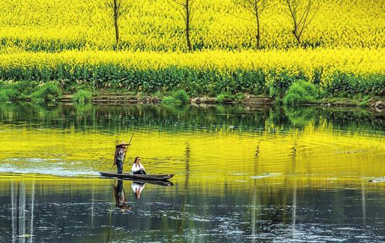 邛崃两河村,油菜花田间泛舟。陶冶 摄